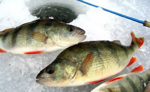 Choosing a place for a perch