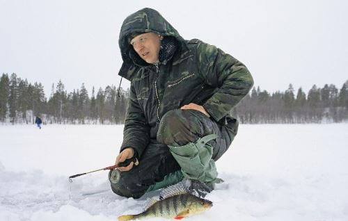 Winter fishing for a predator in the Arctic